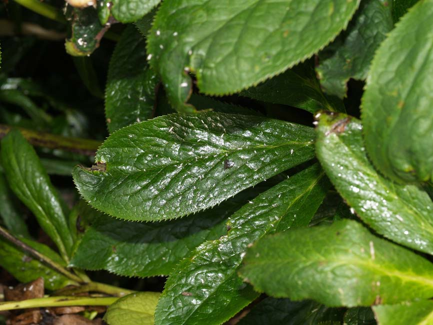 Lus i planter indendørs